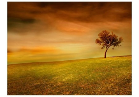 Fototapeta - Samotne drzewo