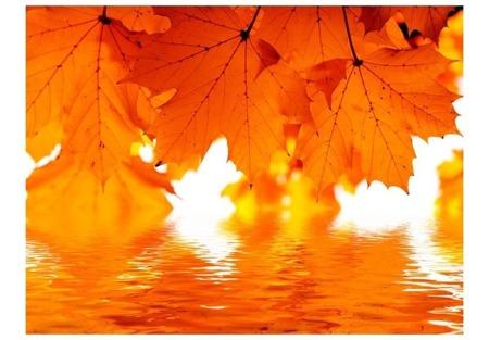 Fototapeta - liście - jesień