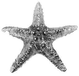Figurka Rozgwiazda Srebrna Dekoracja 6,x21,5cm