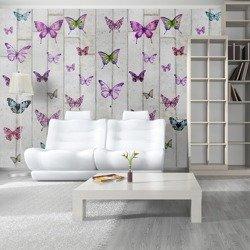 Fototapeta - Motyle i beton
