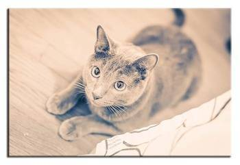 Obraz - Dogs&Cats 50x70 cm