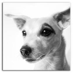 Obraz - Dogs&Cats 80x80 cm