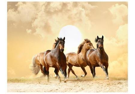 Fototapeta - Konie w galopie