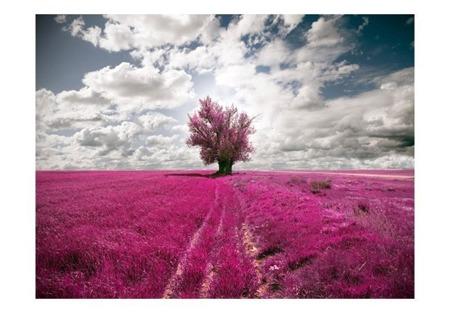 Fototapeta - Łąka w kolorze fuksji