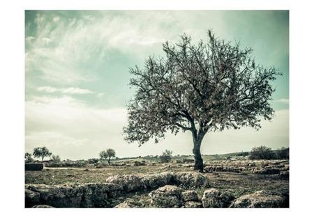 Fototapeta - drzewo - vintage