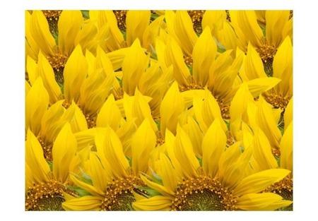 Fototapeta - słoneczniki - tło