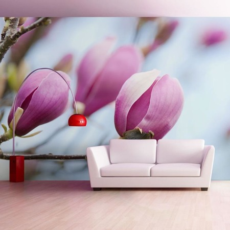 Fototapeta - wiosna - magnolia