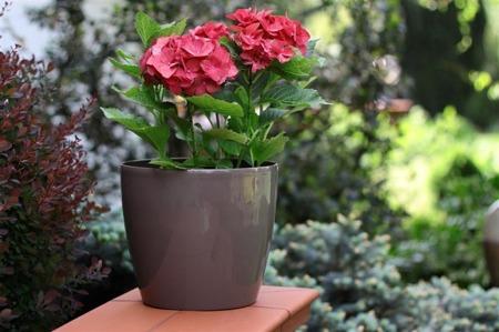 Osłonka do kwiatów Magnolia Bordo 30x30 H: 26,5 cm